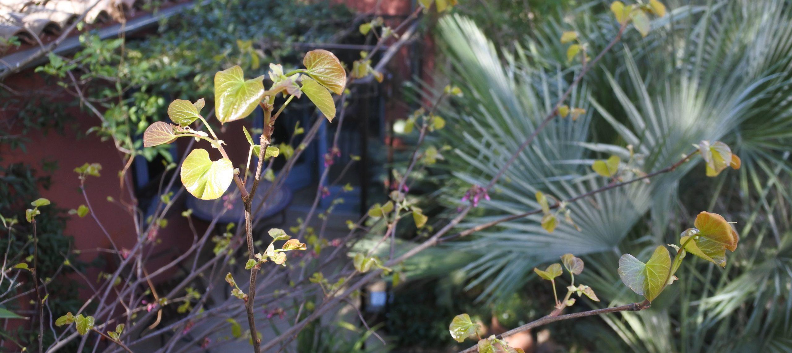 1MP2 jardin accueil