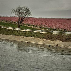 Floraison des vergers ©1MP2-1